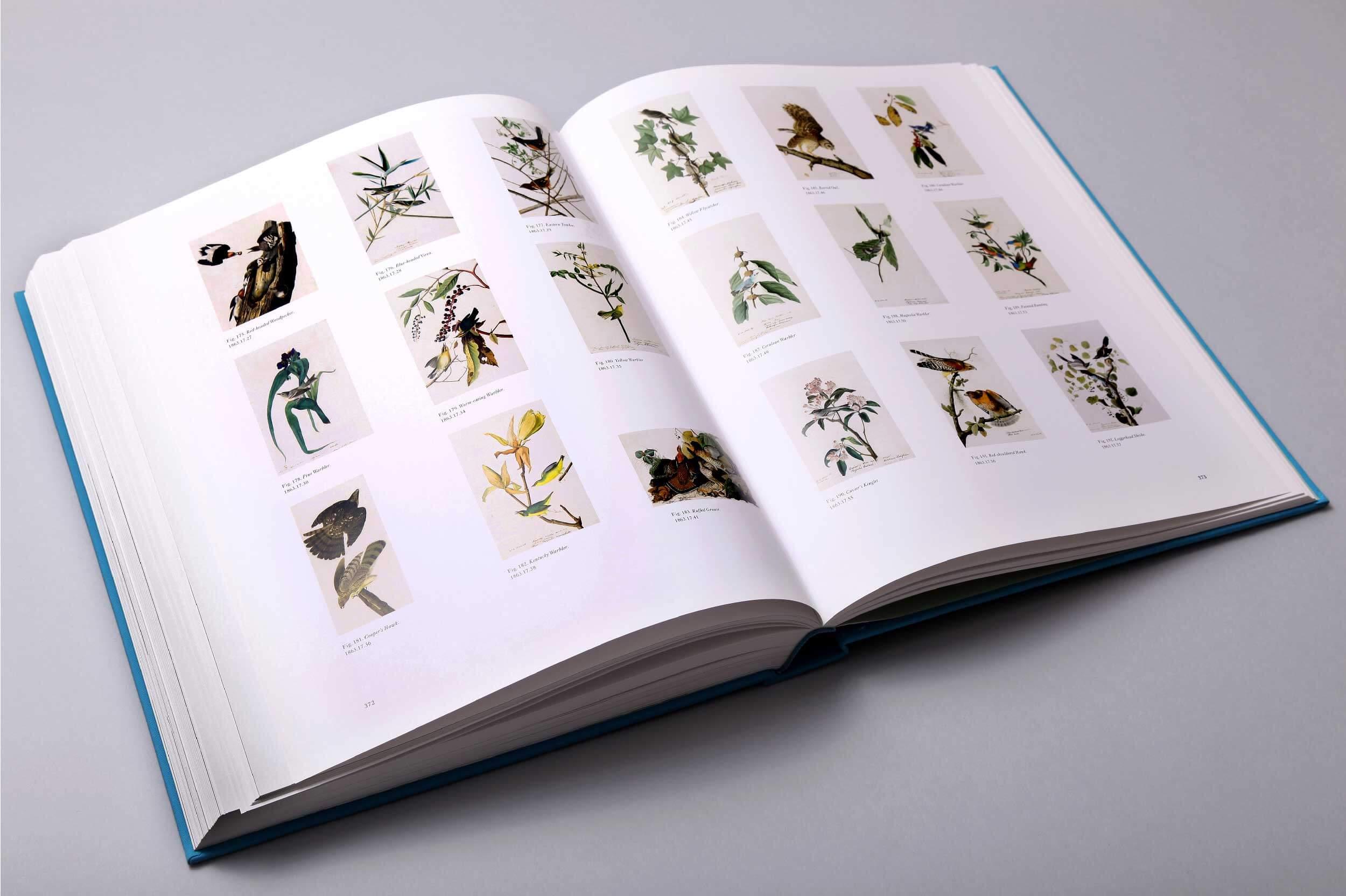 audubons-aviary-8