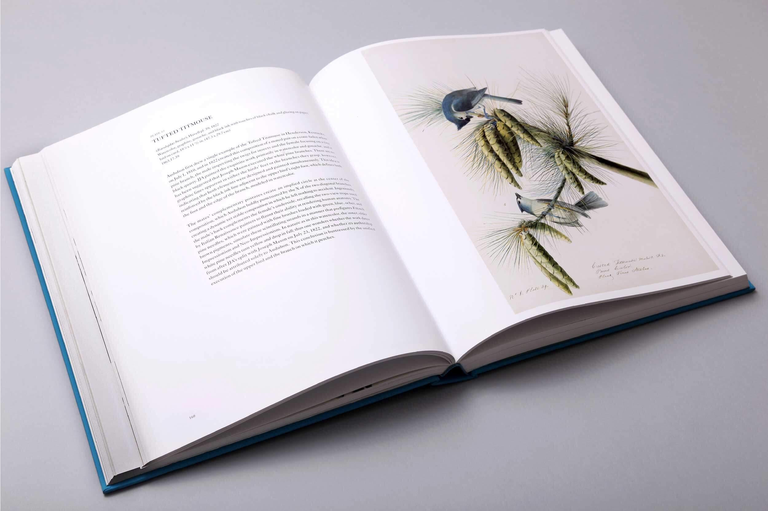 audubons-aviary-6
