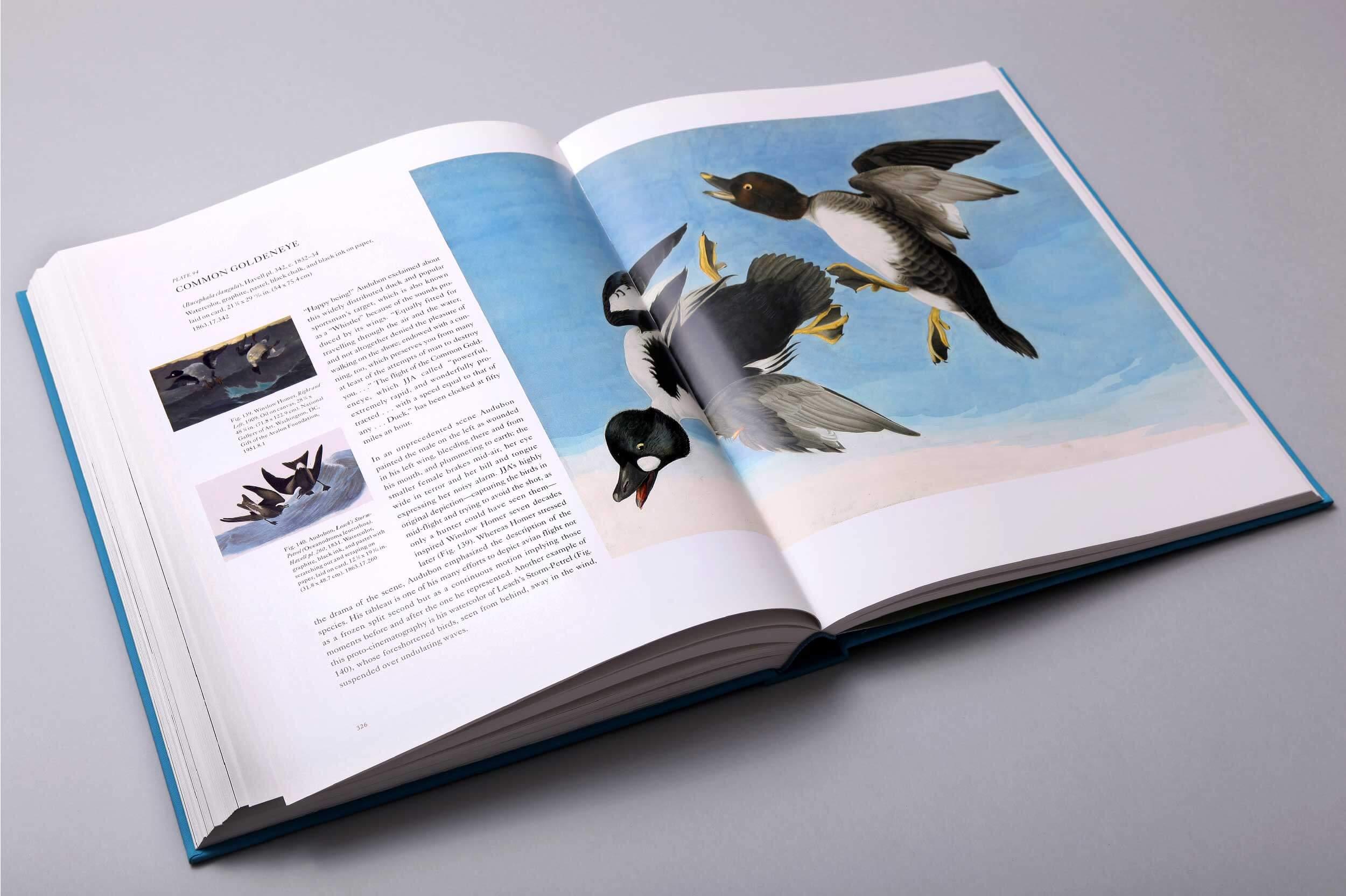 audubons-aviary-7